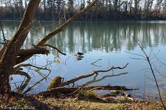 """Au soleil au bord de l'eau (Brigitte .. . """"Tatie Clic"""") Tags: 2020011410 janvier hiver lac eau sansretouche refletsdansleau branche brindilles lotetgaronne aquitaine francesudouest"""