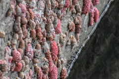 SueloAgua (Leonardo Tassitani) Tags: suelo agua