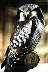 owl (kingajaroszphotography) Tags: sleeping adult big owl sitting branch feathers bird gray zoo vacation trip sightseeing photo photography nature animal