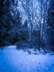 Ordinary without My Dark Mistress (DrCuervo) Tags: iphone snow rain mydarkmistress trees empty seattle