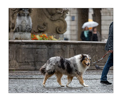 doggy in the rain (Armin Fuchs) Tags: arminfuchs lavillelaplusdangereuse würzburg dog animal vierröhrenbrunnen street rain autumn october umbrella
