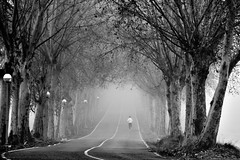Running in a foggy morning (jaume zamorano) Tags: blackandwhite blancoynegro blackwhite blackandwhitephotography blackandwhitephoto bw boira brouillard catalunya d5500 fog foggy gente jogging monochrome monocromo mist noiretblanc nikon nikonistas niebla pov people road running street streetphotography streetphoto streetphotograph streetphotoblackandwhite view