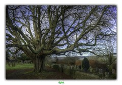 WYE / ST.GREGORY & ST.MARTIN'S CHURCHYARD (régisa) Tags: churchyard cimetière église wye kent england angleterre stgregorystmartins grave tombstone highstreet tombe arbre tree