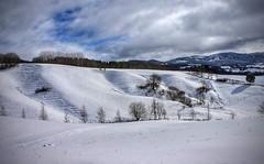 Winter landscape (Kjetil Øvrebø) Tags: tree frost snow winter landscape skjetlein norway trondheim leinstrand
