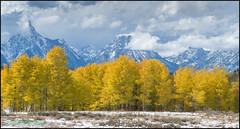 Grand Teton - Golden Aspen Trees (geospace) Tags: grandteton fall autumn gold mountains aspens