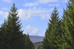 ....and Far Away (Robin Shepperson) Tags: trees landscape distance view views skierke nature wildlife gree sky clouds blue hills countryside rural beautiful nikon d3400 vr1 55200mm holiday endofsummer september daylight natural naturallight