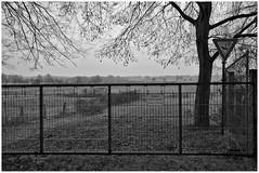 Beware, Bull in Herd (LeonardoDaQuirm) Tags: bull bulle herde herd naturereserve ruhr duisburg aue zaun fence animal tier duissern blackwhite
