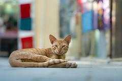 Dubai Street Cat (VintageLensLover) Tags: katzen strasenkatzen cats stadt dubai altstadt souk tiere katzenliebe dof schärfentiefe schärfeverlauf bokeh bokehlicious tamron sonya7iii tamron2875f28