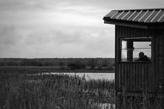watcher (Pea Jay How) Tags: landscape view blackandwhite monochrome mono reedbeds reeds water birdwatching birdwatcher birding birds rspb islandmerehide islandmere suffolk minsmere