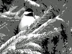 My LIttle Chickadee... (kfocean01) Tags: blackandwhite bird birds bw black gray winter white nature wildlife contrast photoshop photomanipulation posterize shockofthenew