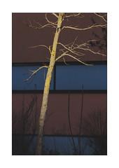 enlightened tree in front of a dark building (Armin Fuchs) Tags: arminfuchs lavillelaplusdangereuse tree light colors diagonal