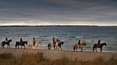 Riding pleasure on the wintry beach (Ostseeleuchte) Tags: reitvergnügenamwinterlichenstrand ridingpleasureonthewintrybeach pferde reiter horses eqestrian pferdesport winterstrand wintrybeach ostsee balticsea