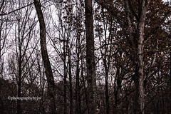Bleak Late Fall (Photographybyjw) Tags: bleak late fall gray much color this woods shot north carolina ©photographybyjw wood weathered brown rural country