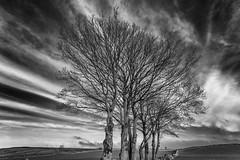 Winter Trees (l4ts) Tags: landscape derbyshire peakdistrict whitepeak hartington reynardslane trees cloudscape clouds blackwhite monochrome