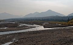 I Came to Live Life in Abundance (Denali National Park & Preserve)