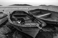DSC06557_1 (Tünay Kasımoğlu) Tags: sonynex6 e1018mmf4oss turkey seascape blackwhite blackandwhite monochrome cats kedi sandal kayık deniz boats beaches sunset landscape siyahbeyaz sea
