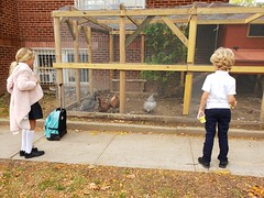 The Kids And The City Chickens (Joe Shlabotnik) Tags: galaxys9 chickens violet everett 2019 october2019 cameraphone