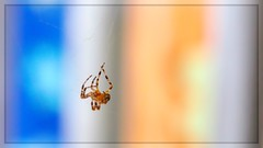 Suspended (Note-ables by Lynn) Tags: spider arachnid minimalism canon suspended