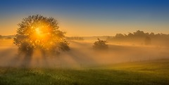 Countryside (somewheredowntheroadphoto) Tags: sunrise fog foggy light country countryside shadow shadows beams tree field fence shine shining morning
