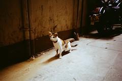 Timid & Curious (wargreymoni) Tags: olympus xa2 kodak streetphotography colorplus film analog cat