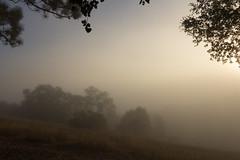 """""""À l'aurore…nous entrerons aux splendides Villes."""" (Dan Forzano) Tags: fineart california summer landscape forest josephgrant sanjose sunrise fog trees haze outdoor dawn woods"""