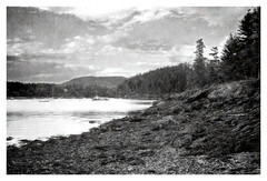 Coastline of Northeast Harbor (kinglear55) Tags: landscape coastline maine northeastharbor monochrome blackandwhite painterly impressionism olympusom10 adobe elements art photography tamron35135mmlens