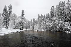 Yosemite Valley, California (paccode) Tags: solemn california d850 landscape snowstorm river water serious quiet yosemite nationalpark snow yosemitenationalpark unitedstatesofamerica