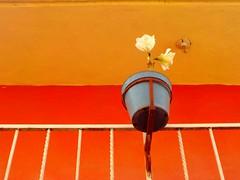 Maceta (Juan Xic Eseyosoyese) Tags: maceta macetera barandar fachada foco casa de la tía cuca colores flowerpic flor nikon coolpix naranja azul blanco amarillo paz tranquilidad relax minimalismo