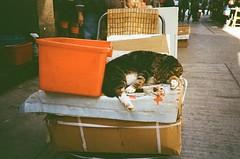 Sleepy Head (wargreymoni) Tags: cat olympus xa2 analog film kodak colorplus200