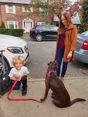 Saying Hi To Sadie (Joe Shlabotnik) Tags: labrador cameraphone galaxys9 2019 october2019 everett sadie dog danam