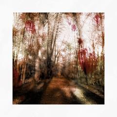 Ghost forest (b_kohnert) Tags: painting digitalpainting digitalart ghost bäume trees weg way waldweg forestroad wald forest landschaft landscape nature natur