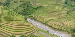 _J5K4286-88.0914.Cầu Ba Nhà.Chế Cu Nha.Mù Cang Chải.Yên Bái (hoanglongphoto) Tags: asia vietnam northvietnam northwestvietnam northernvietnam landscape scenery vietnamlandscape vietnamscenery mucangchailandscape terraces terracedfields seasonharvest manyhouses river mountain flanksmountain canon canoneos1dsmarkiii canonef50mmf12lusm tâybắc yênbái mùcangchải chếcunha cầubanhà phongcảnh ruộngbậcthang lúachín mùagặt núi sườnnúi hẻmnúi suối ruộngbậcthangmùcangchải mùcangchảimùagặt mùcangchảimùalúachín nhũngngôinhà nhà house terracedfieldsinvietnam gorge defile vietnammountainouslandscape hoanglongphoto 1x2