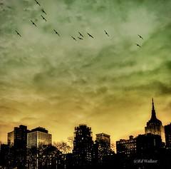 New York City /Avenue of Americas and 42nd Street (Golden Wheels) Tags: bronz statenisland wueens brooklyn birds teilight forsale skyline sky edwardwallacephotography manhattan newyork nyc