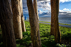 Watching The Lady Watching, Through The Trees That Are Not Real Trees (Alfred Grupstra) Tags: sea nature coastline scenics landscape outdoors tree water nopeople summer sky cliff blue beautyinnature forest rockobject grass wood lady ijsselmeer dike lake 921