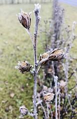 Winter colors (Radu Andrei B) Tags: