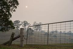 No escape (OzzRod) Tags: sony a7rii sonyzeissfe55mmf18za bushfire smoke sun rural trees farmland gate fence dailyinjanuary2020 tilba nswfarsouthcoast