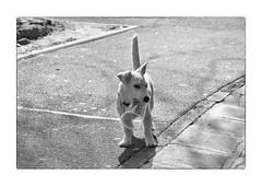 'I own my own plastic cup!' (Armin Fuchs) Tags: arminfuchs lavillelaplusdangereuse animal dog plasticcup cup shadows diagonal animalportrait