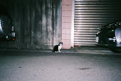 (ourutopia.) Tags: film fuji superia xtra superiaxtra400 yashica t2 yashicat2 filmphotography analog analogphotography cat neko meow wall street roadside night alley フィルム ねこ 猫