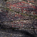 Norwegen 1998 (491+492 Montage) Helleristninger Evenhus