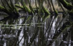 Swamp (Theo Bauhuis) Tags: water nat vragenderveen trees reflection peat wetlands darkwater moor reflectie spiegeling