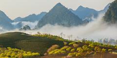 _MG_6233.0212.1.Tân Lập.Mộc Châu.Sơn La (hoanglongphoto) Tags: fog foggy thickgloom misty haze mists mist thickfog hoanglongphoto canoneos5dmarkii mộcchâu sơnla vietnam việtnam northvietnam northernvietnam vietnamlandscape scenery vietnamscenery mocchau landscape morning nature asia asian northwestvietnam naturelandscape mocchaulandscape sky vietnammountainouslandscape forest theforest earlyfrost earlymorningfog fogofmocchau sươngmùmộcchâu tâybắc tânlập sươngmù núi mountain phongcảnhthiênnhiên sươngsớmmộcchâu người sunshine sunny morningsunshine buổisáng nắng nắngsớm plumblossom hoamận hoamậnmộcchâu đồihoamận earlysunshine canonef100400mmf4556lisusm flanksmountain sườnnúi clouds mây mâyluồnmộcchâu mâymộcchâu