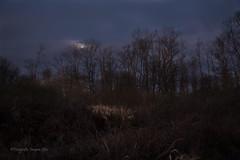 2020-1-12 knuppelpad 111 c © (Jacques Sper) Tags: knuppelpad idegem outdoor oostvlaanderen kleur color maan moon canon bos forest jacques sper
