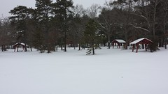 To Past Picnics and Those Yet To Come.... (Art of MA Foto Stud) Tags: wareham snow winter cold ice slush forest trees woods pines coniferous massachusetts interstate