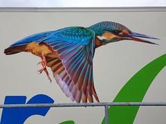Kingfisher truckpainting. (capelleaandenijssel) Tags: painting lorry camion lkw art netherlands nl bird fauna wildlife nature