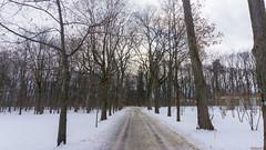 Winter, hiver - Parc du Bois-de-Coulonge, Québec, Canada  - 3411 (rivai56) Tags: winter hiver parcduboisdecoulonge québec canada 3411 parc du boisdecoulonge park chemin sentier trail