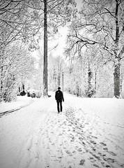 WHITE MOOD - ONE YEAR AGO (bhs-photo) Tags: bnw monochrome schwarzweis noiretblanc street snow königswinter leica leicaq minimal minimalism