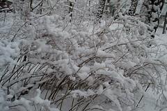 Winter (olaf_alien) Tags: nikon d3200 1800 5500 mm f35 56 olafalien winter snow brush nature landscape russia lyubertsy россия люберцы