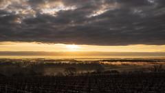 View (ZeGaby) Tags: brumes champagne fujifilm fujinon27mm landscape marne mist naturephotography paysage paysagedechampagne sunrise vigne vignoble vines vineyards xt1