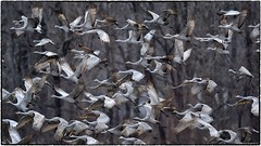 Departure (RKop) Tags: ewingbottoms indiana raphaelkopanphotography nikon nature birds d500 600mmf4evr