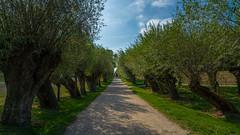 Unterwegs auf der Insel Poel  (19) (berndtolksdorf1) Tags: deutschland mecklenburgvorpommern inselpoel outdoor strase weiden bäume weg himmel